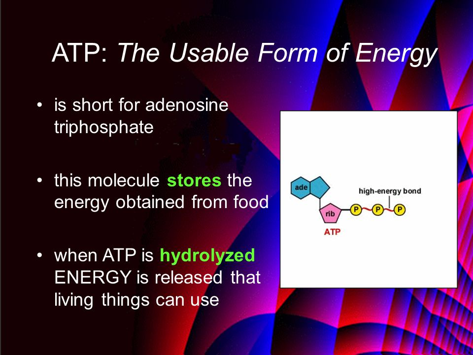 ATP: The Usable Form of Energy is short for adenosine triphosphate this molecule stores the energy obtained from food when ATP is hydrolyzed ENERGY is released that living things can use