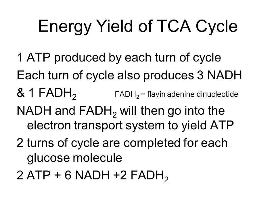 Energy Yield of TCA Cycle 1 ATP produced by each turn of cycle Each turn of cycle also produces 3 NADH & 1 FADH 2 FADH 2 = flavin adenine dinucleotide NADH and FADH 2 will then go into the electron transport system to yield ATP 2 turns of cycle are completed for each glucose molecule 2 ATP + 6 NADH +2 FADH 2