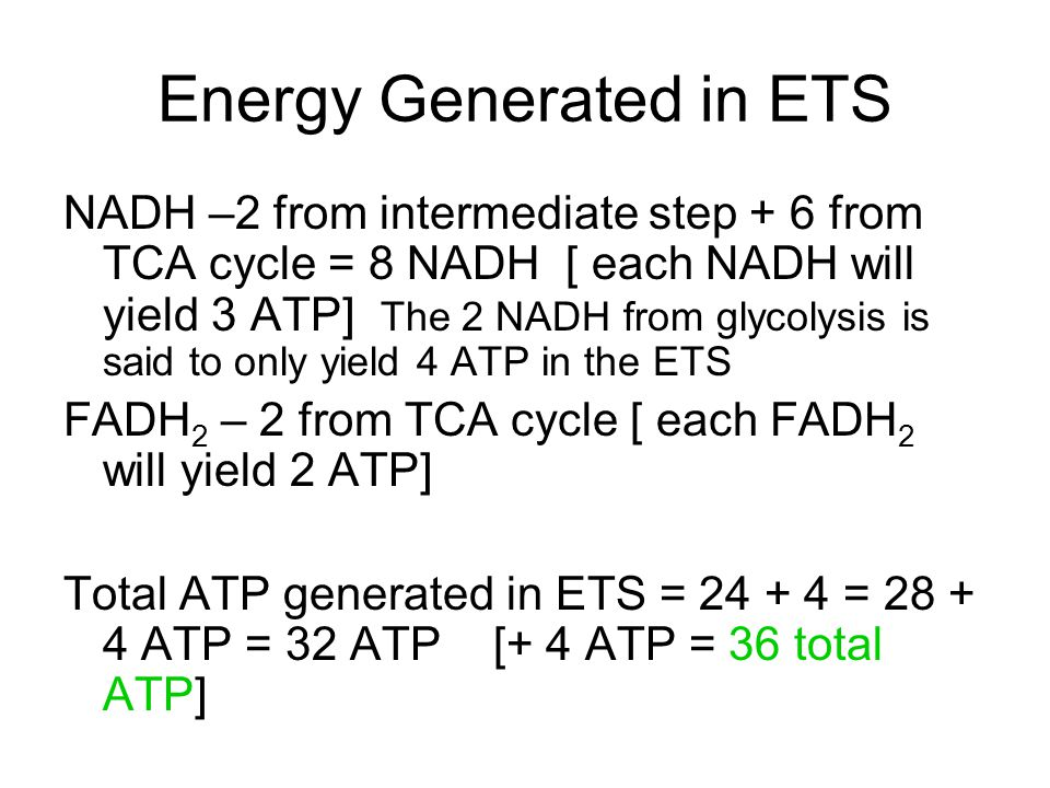 Energy Generated in ETS NADH –2 from intermediate step + 6 from TCA cycle = 8 NADH [ each NADH will yield 3 ATP] The 2 NADH from glycolysis is said to only yield 4 ATP in the ETS FADH 2 – 2 from TCA cycle [ each FADH 2 will yield 2 ATP] Total ATP generated in ETS = 24 + 4 = 28 + 4 ATP = 32 ATP [+ 4 ATP = 36 total ATP]