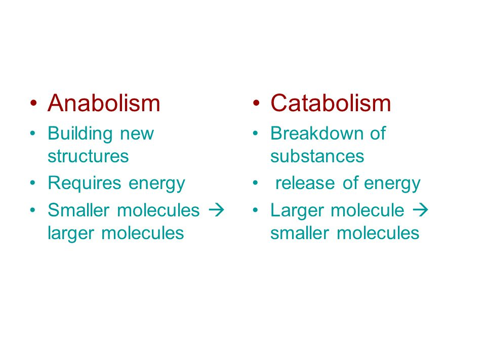 Anabolism Building new structures Requires energy Smaller molecules  larger molecules Catabolism Breakdown of substances release of energy Larger molecule  smaller molecules