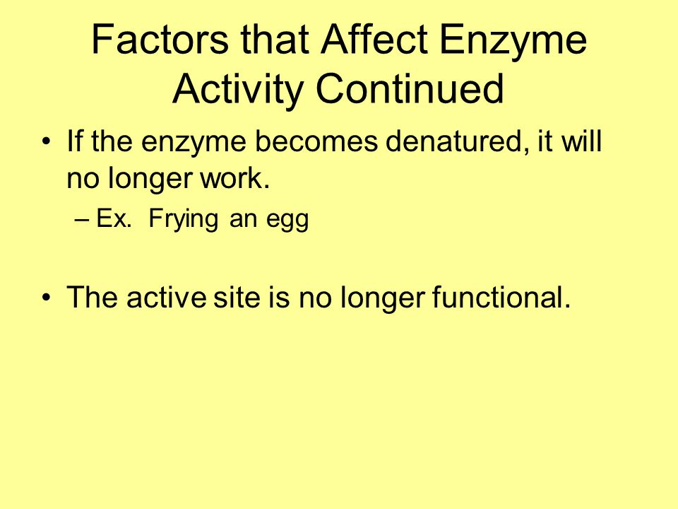 Factors that Affect Enzyme Activity Continued If the enzyme becomes denatured, it will no longer work.