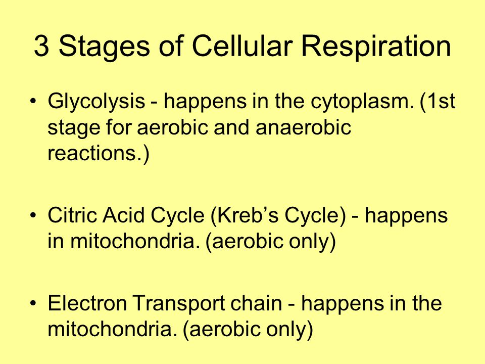 3 Stages of Cellular Respiration Glycolysis - happens in the cytoplasm.