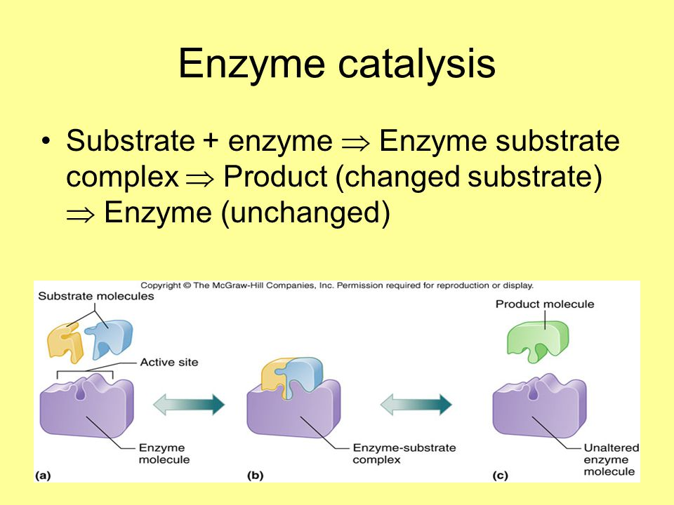 Enzyme catalysis Substrate + enzyme  Enzyme substrate complex  Product (changed substrate)  Enzyme (unchanged)
