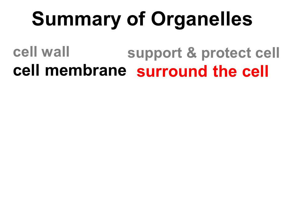 Summary of Organelles cell wall cell membrane support & protect cell surround the cell