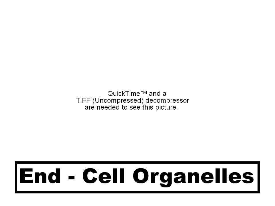 End - Cell Organelles