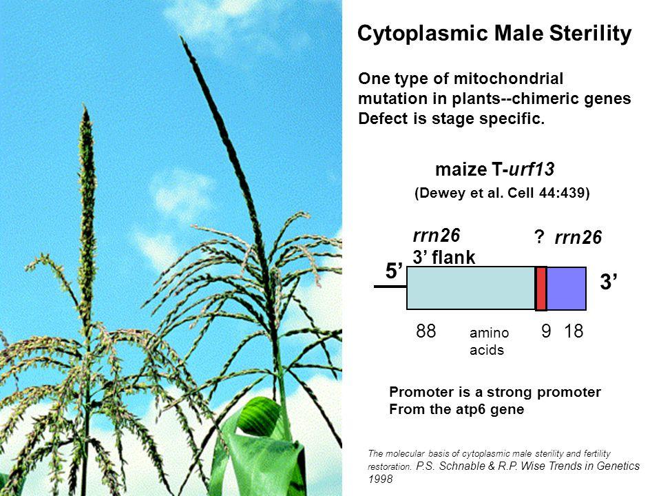 The molecular basis of cytoplasmic male sterility and fertility restoration.