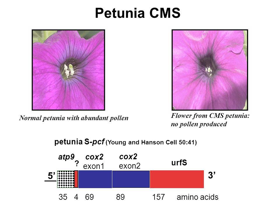 Petunia CMS atp9 .