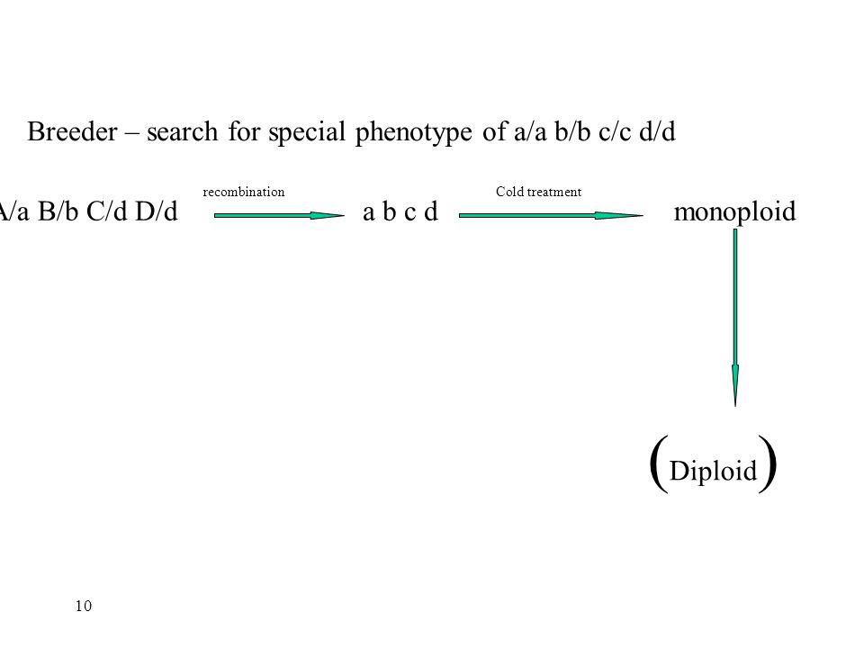 Breeder – search for special phenotype of a/a b/b c/c d/d A/a B/b C/d D/d recombination a b c d Cold treatment monoploid ( Diploid ) 10