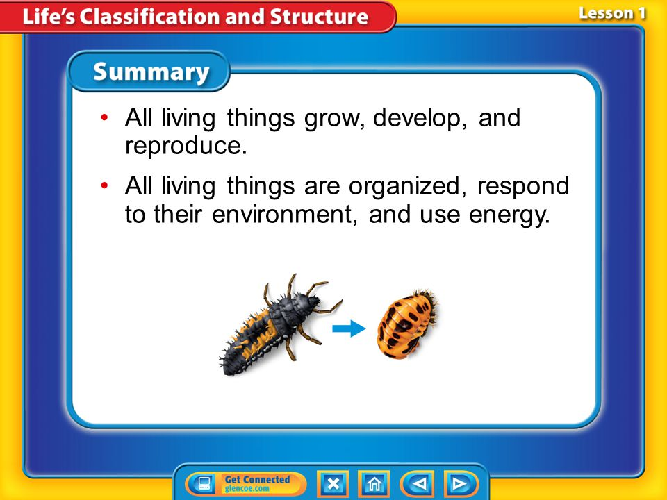 Lesson 1-3 How are living things classified