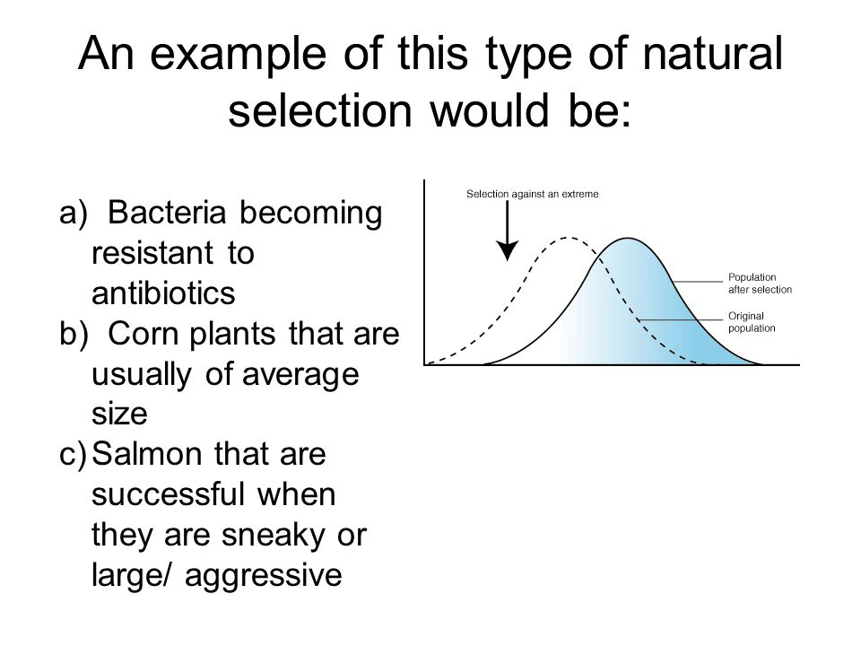 An example of this type of natural selection would be: a) Bacteria becoming resistant to antibiotics b) Corn plants that are usually of average size c)Salmon that are successful when they are sneaky or large/ aggressive