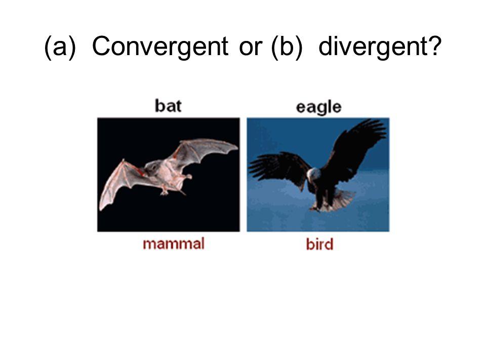 (a) Convergent or (b) divergent
