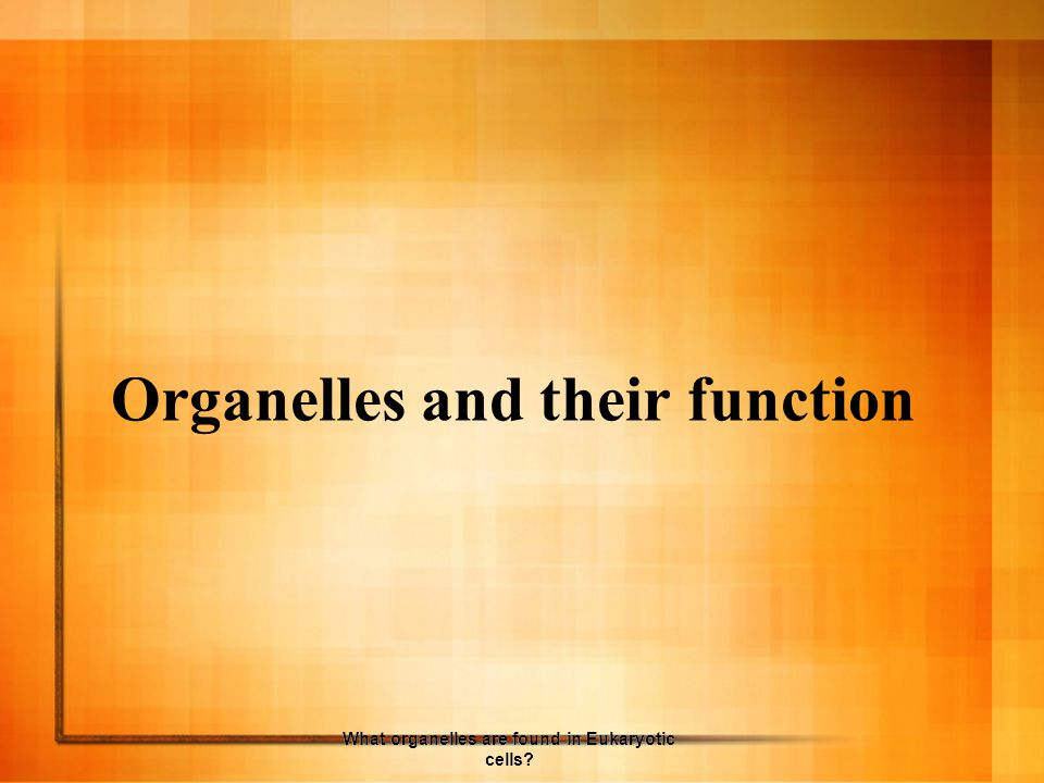 Organelles and their function What organelles are found in Eukaryotic cells?