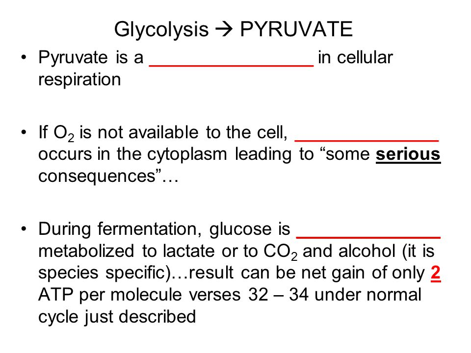 Glycolysis  PYRUVATE Pyruvate is a ________________ in cellular respiration If O 2 is not available to the cell, ______________ occurs in the cytoplasm leading to some serious consequences … During fermentation, glucose is ______________ metabolized to lactate or to CO 2 and alcohol (it is species specific)…result can be net gain of only 2 ATP per molecule verses 32 – 34 under normal cycle just described