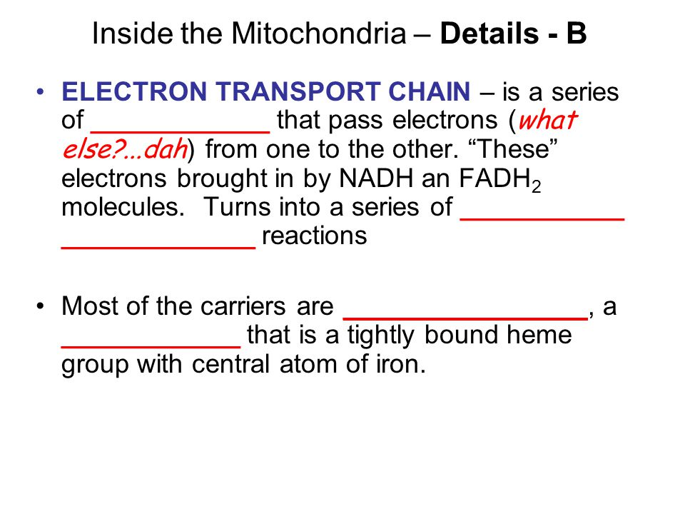 Inside the Mitochondria – Details - B ELECTRON TRANSPORT CHAIN – is a series of ____________ that pass electrons ( what else ...dah ) from one to the other.