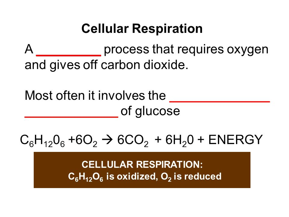 Make sure you know these terms and where they fit in Pyruvate  Prep Reaction  Citric Acid Cycle  Glycolysis Electron Transport Chain ATP Fermentation Anaerobic vs.