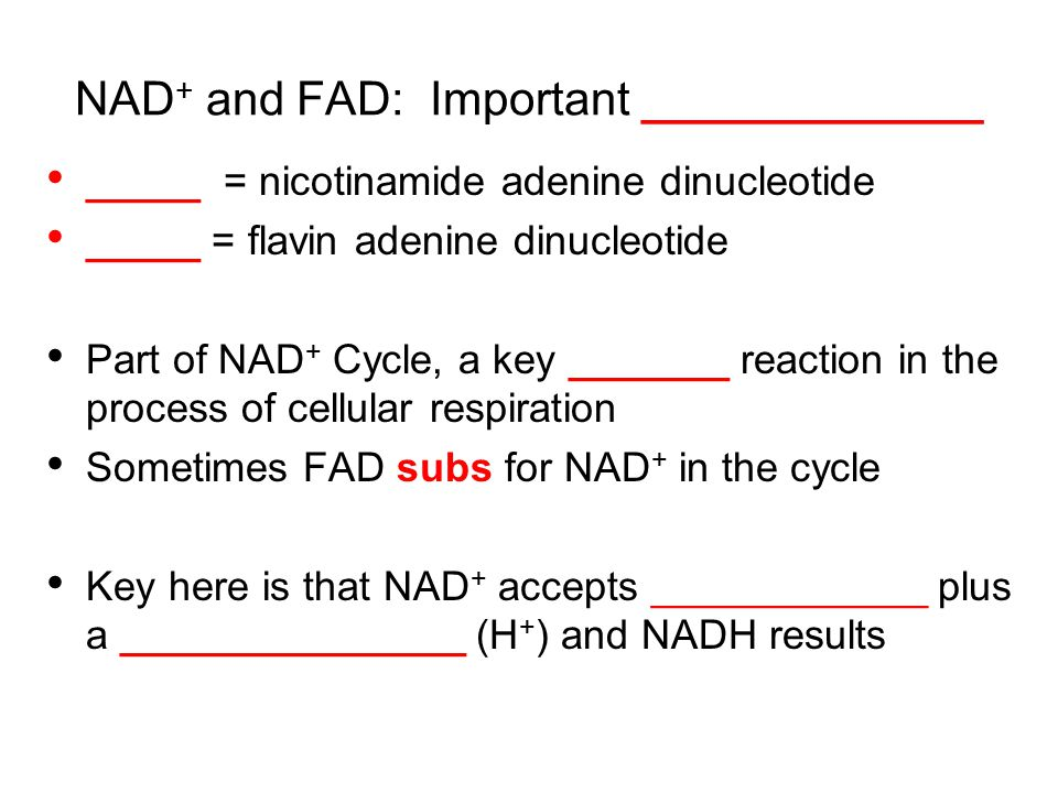 NAD + and FAD: Important _____________ _____ = nicotinamide adenine dinucleotide _____ = flavin adenine dinucleotide Part of NAD + Cycle, a key _______ reaction in the process of cellular respiration Sometimes FAD subs for NAD + in the cycle Key here is that NAD + accepts ____________ plus a _______________ (H + ) and NADH results