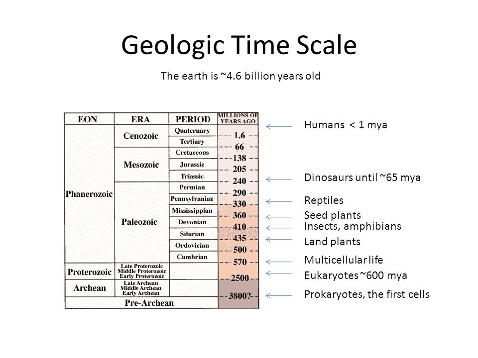 Geologic Time Scale The earth is ~4.6 billion years old Humans < 1 mya Dinosaurs until ~65 mya Multicellular life Land plants Insects, amphibians Reptiles Seed plants Eukaryotes ~600 mya Prokaryotes, the first cells