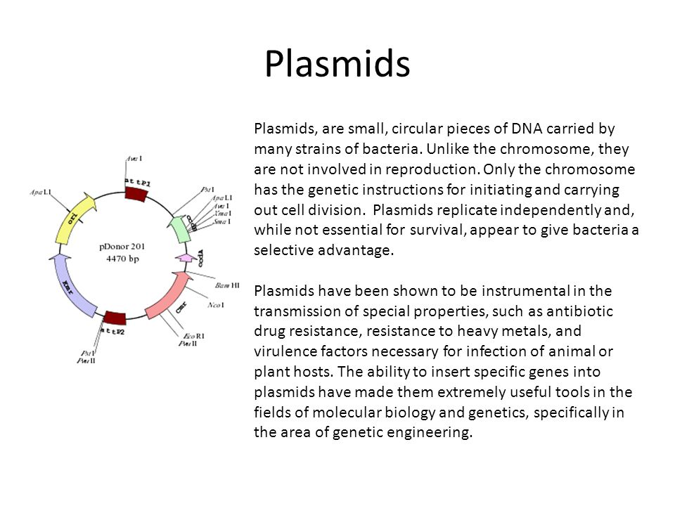 Plasmids Plasmids, are small, circular pieces of DNA carried by many strains of bacteria.