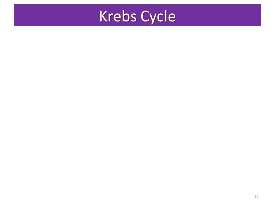 Krebs Cycle 17