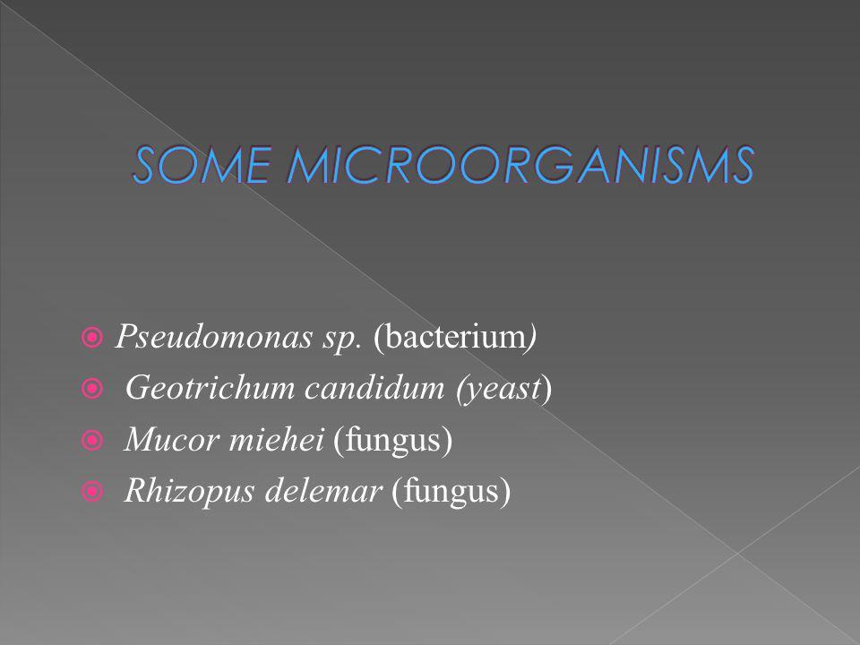  Pseudomonas sp. (bacterium)  Geotrichum candidum (yeast)  Mucor miehei (fungus)  Rhizopus delemar (fungus)