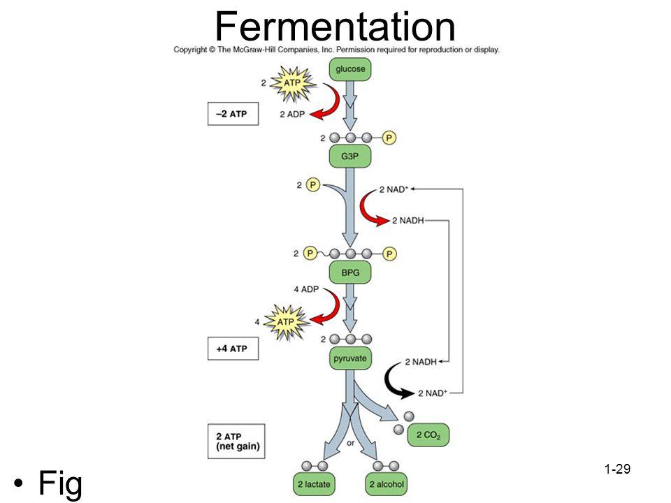 1-29 Fermentation Fig 7.10