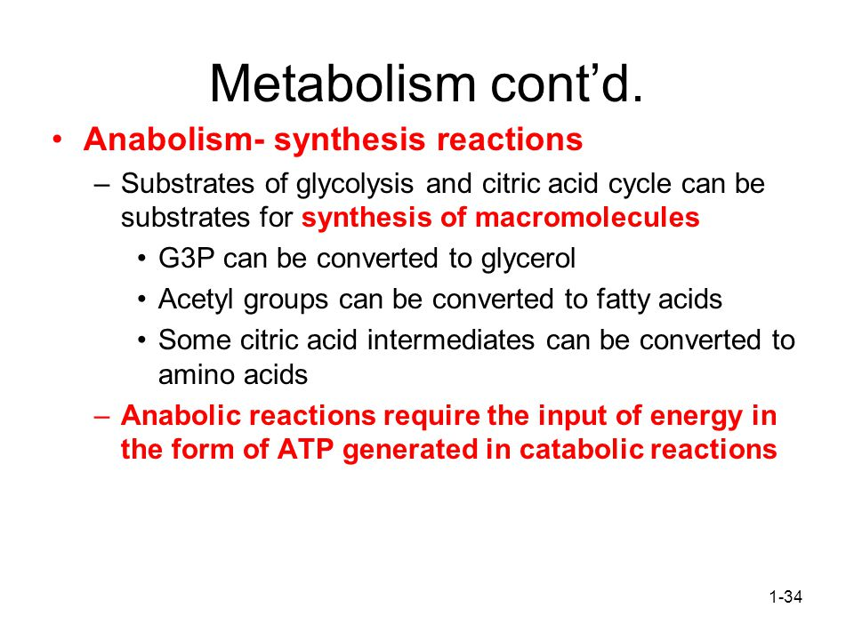 1-34 Metabolism cont'd.
