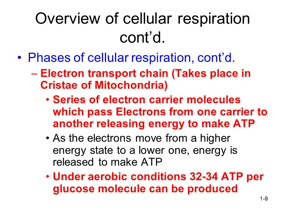 1-9 Overview of cellular respiration cont'd.Phases of cellular respiration, cont'd.
