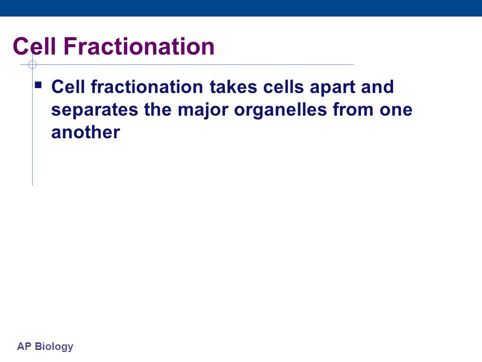 AP Biology Cell Fractionation  Cell fractionation takes cells apart and separates the major organelles from one another