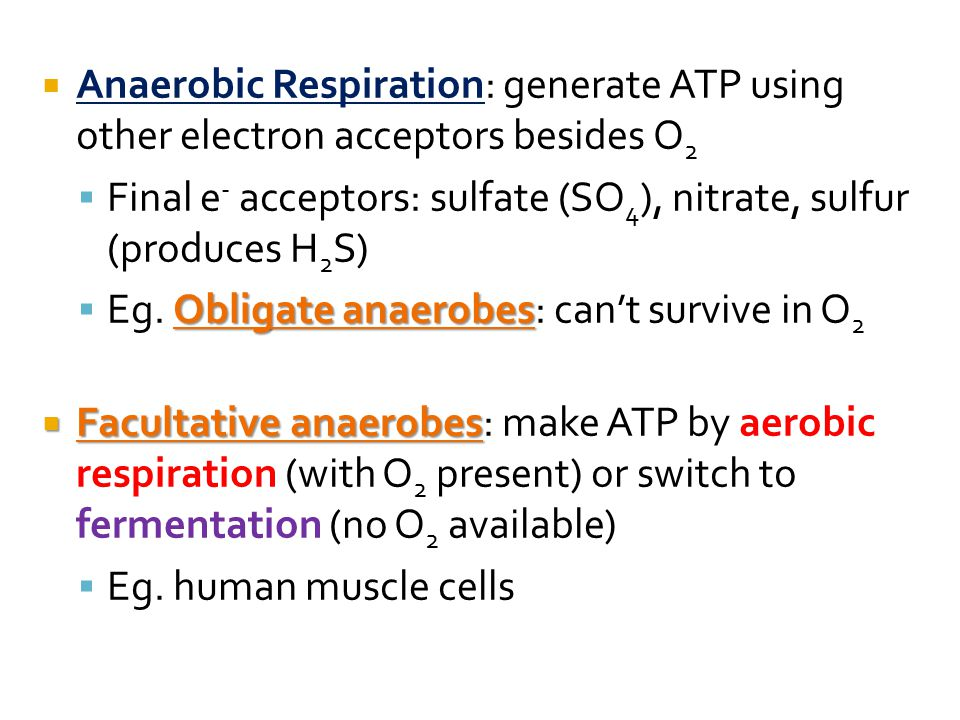  Anaerobic Respiration: generate ATP using other electron acceptors besides O 2  Final e - acceptors: sulfate (SO 4 ), nitrate, sulfur (produces H 2 S) Obligate anaerobes  Eg.