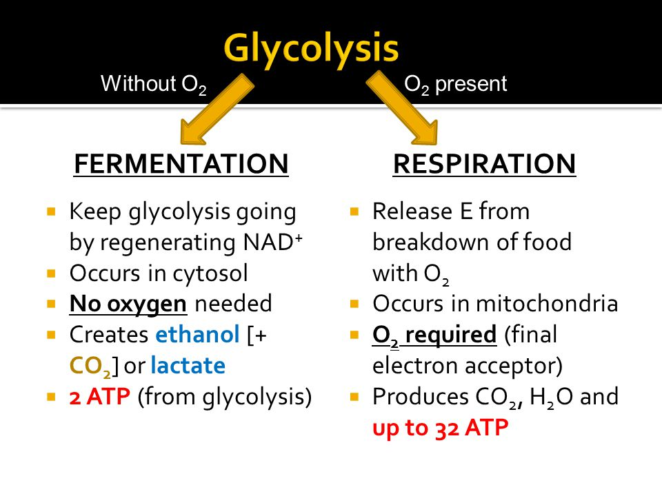 FERMENTATION  Keep glycolysis going by regenerating NAD +  Occurs in cytosol  No oxygen needed  Creates ethanol [+ CO 2 ] or lactate  2 ATP (from glycolysis) RESPIRATION  Release E from breakdown of food with O 2  Occurs in mitochondria  O 2 required (final electron acceptor)  Produces CO 2, H 2 O and up to 32 ATP O 2 presentWithout O 2