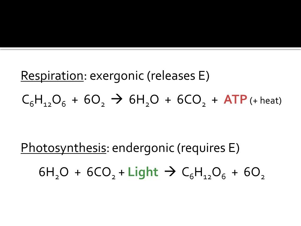 Respiration: exergonic (releases E) C 6 H 12 O 6 + 6O 2  6H 2 O + 6CO 2 + ATP (+ heat) Photosynthesis: endergonic (requires E) 6H 2 O + 6CO 2 + Light  C 6 H 12 O 6 + 6O 2