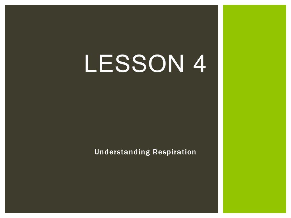 Understanding Respiration LESSON 4