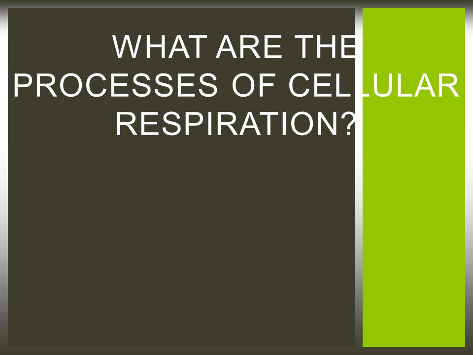 WHAT ARE THE PROCESSES OF CELLULAR RESPIRATION?