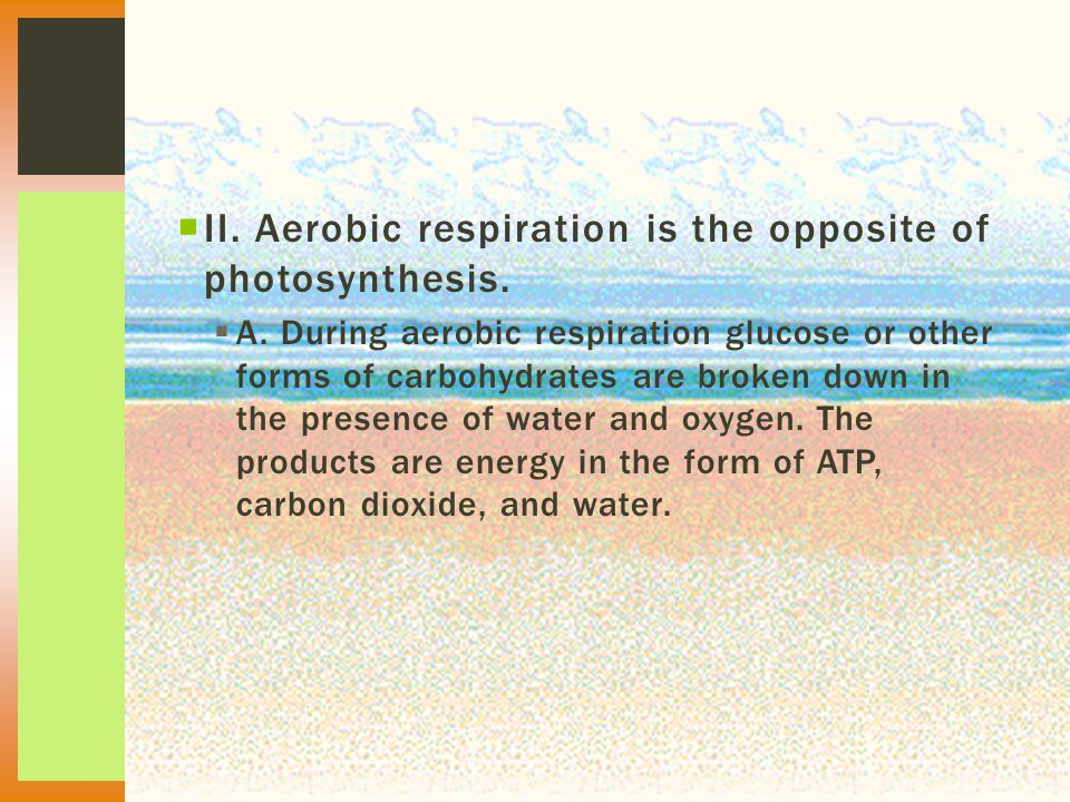  II. Aerobic respiration is the opposite of photosynthesis.  A. During aerobic respiration glucose or other forms of carbohydrates are broken down i