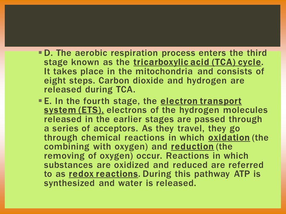  D. The aerobic respiration process enters the third stage known as the tricarboxylic acid (TCA) cycle. It takes place in the mitochondria and consis