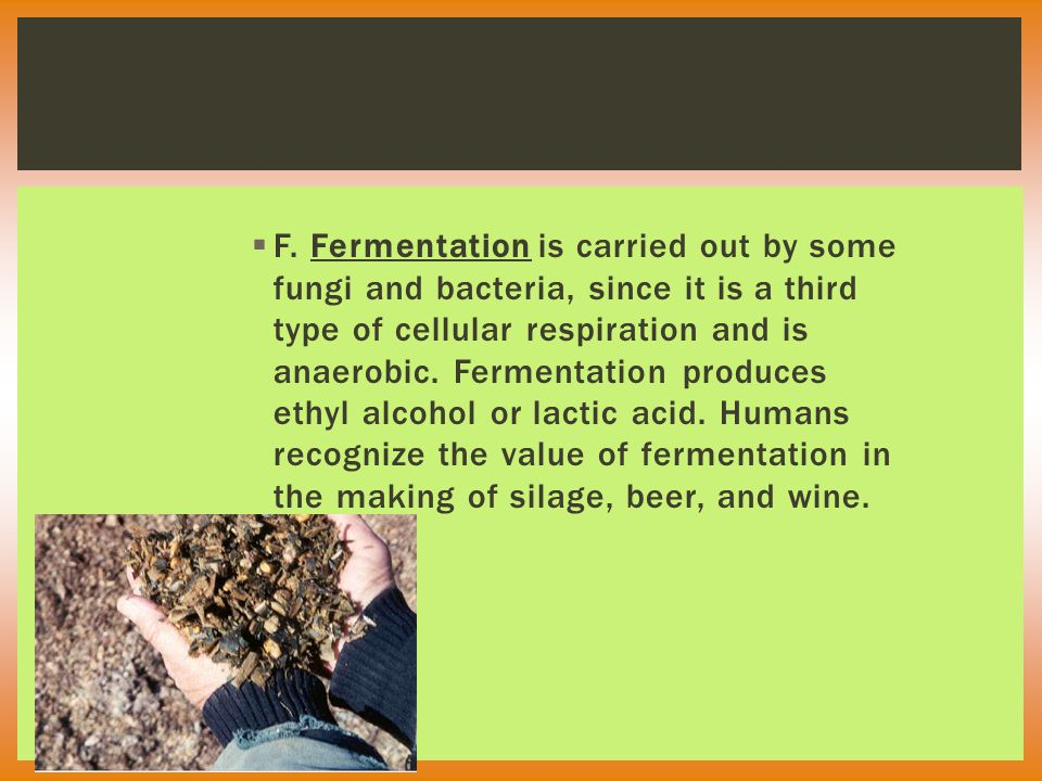  F. Fermentation is carried out by some fungi and bacteria, since it is a third type of cellular respiration and is anaerobic. Fermentation produces