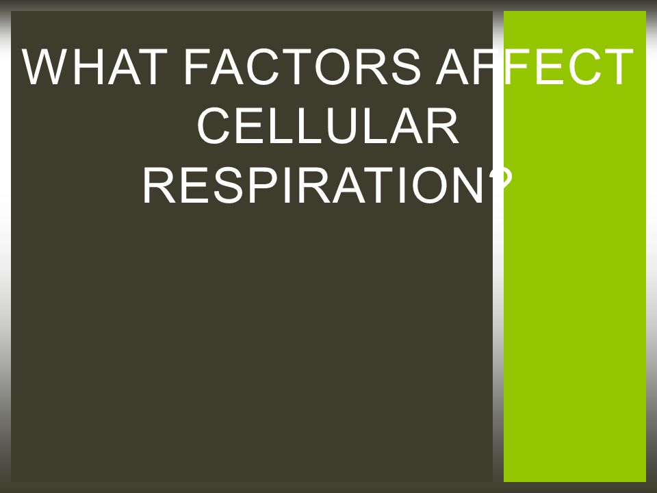 WHAT FACTORS AFFECT CELLULAR RESPIRATION?