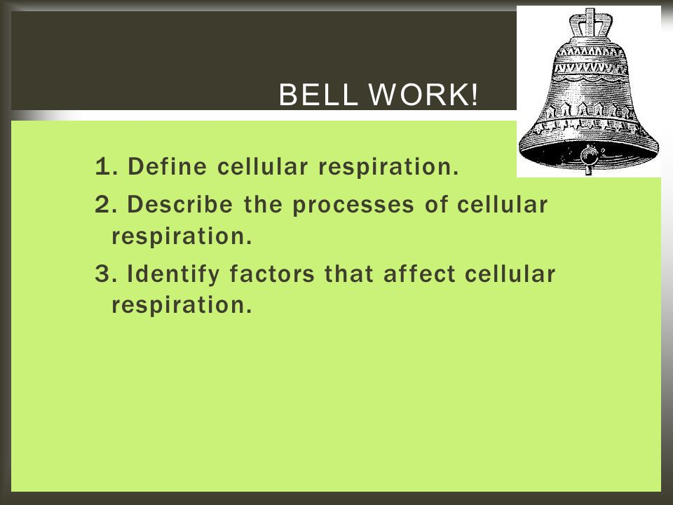 1. Define cellular respiration. 2. Describe the processes of cellular respiration. 3. Identify factors that affect cellular respiration. BELL WORK!