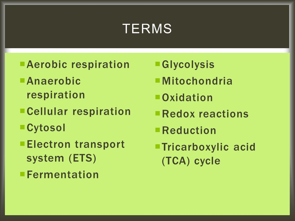  Aerobic respiration  Anaerobic respiration  Cellular respiration  Cytosol  Electron transport system (ETS)  Fermentation  Glycolysis  Mitochondria  Oxidation  Redox reactions  Reduction  Tricarboxylic acid (TCA) cycle TERMS