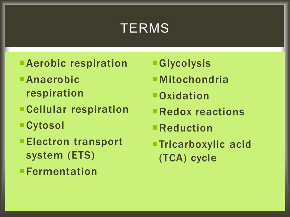  Aerobic respiration  Anaerobic respiration  Cellular respiration  Cytosol  Electron transport system (ETS)  Fermentation  Glycolysis  Mitocho
