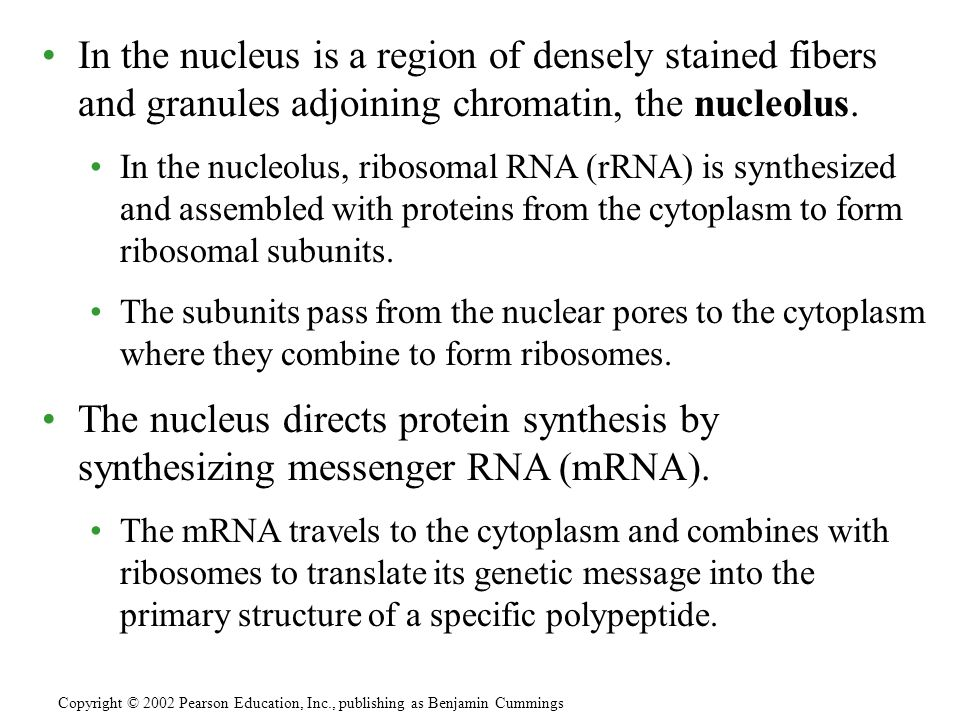 Ribosomes contain rRNA and protein.