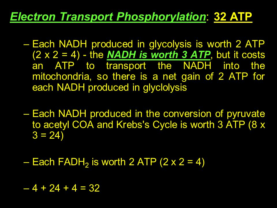 Electron Transport Phosphorylation: 32 ATP –Each NADH produced in glycolysis is worth 2 ATP (2 x 2 = 4) - the NADH is worth 3 ATP, but it costs an ATP to transport the NADH into the mitochondria, so there is a net gain of 2 ATP for each NADH produced in glyclolysis –Each NADH produced in the conversion of pyruvate to acetyl COA and Krebs s Cycle is worth 3 ATP (8 x 3 = 24) –Each FADH 2 is worth 2 ATP (2 x 2 = 4) –4 + 24 + 4 = 32