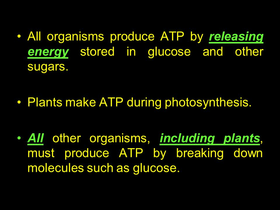 All organisms produce ATP by releasing energy stored in glucose and other sugars.