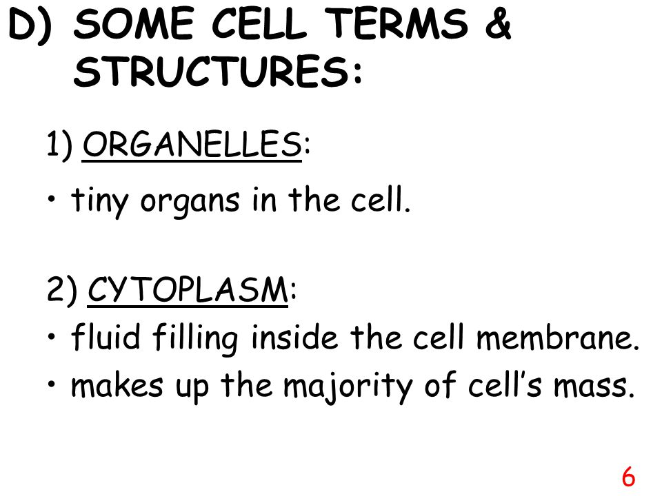 Large No Cell wall Small Vacuoles No Chloroplasts Cell wall Large Vacuoles Chloroplasts 5 C) COMPARING TWO EUKARYOTIC CELLS: ANIMAL CELL VS.PLANT CELL