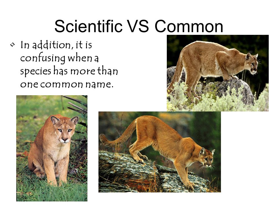 Scientific VS Common In addition, it is confusing when a species has more than one common name.