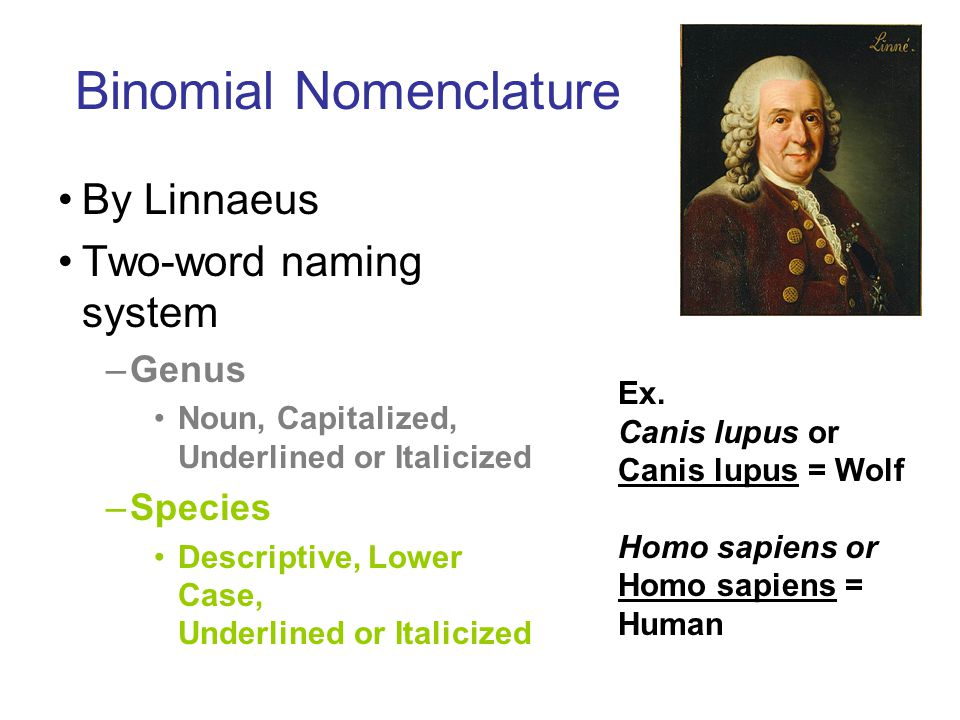 Binomial Nomenclature By Linnaeus Two-word naming system –Genus Noun, Capitalized, Underlined or Italicized –Species Descriptive, Lower Case, Underlined or Italicized Ex.
