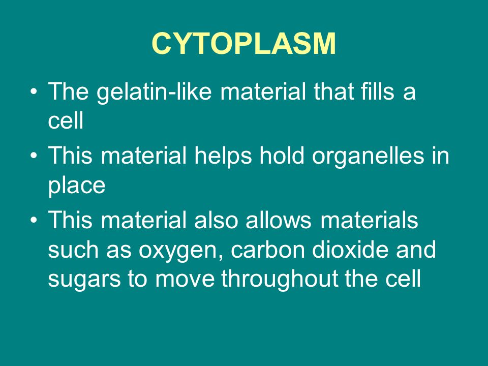 CYTOPLASM The gelatin-like material that fills a cell This material helps hold organelles in place This material also allows materials such as oxygen,