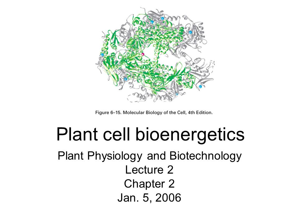 Plant cell bioenergetics Plant Physiology and Biotechnology Lecture 2 Chapter 2 Jan. 5, 2006