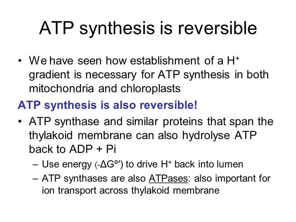 ATP synthesis is reversible We have seen how establishment of a H + gradient is necessary for ATP synthesis in both mitochondria and chloroplasts ATP synthesis is also reversible.