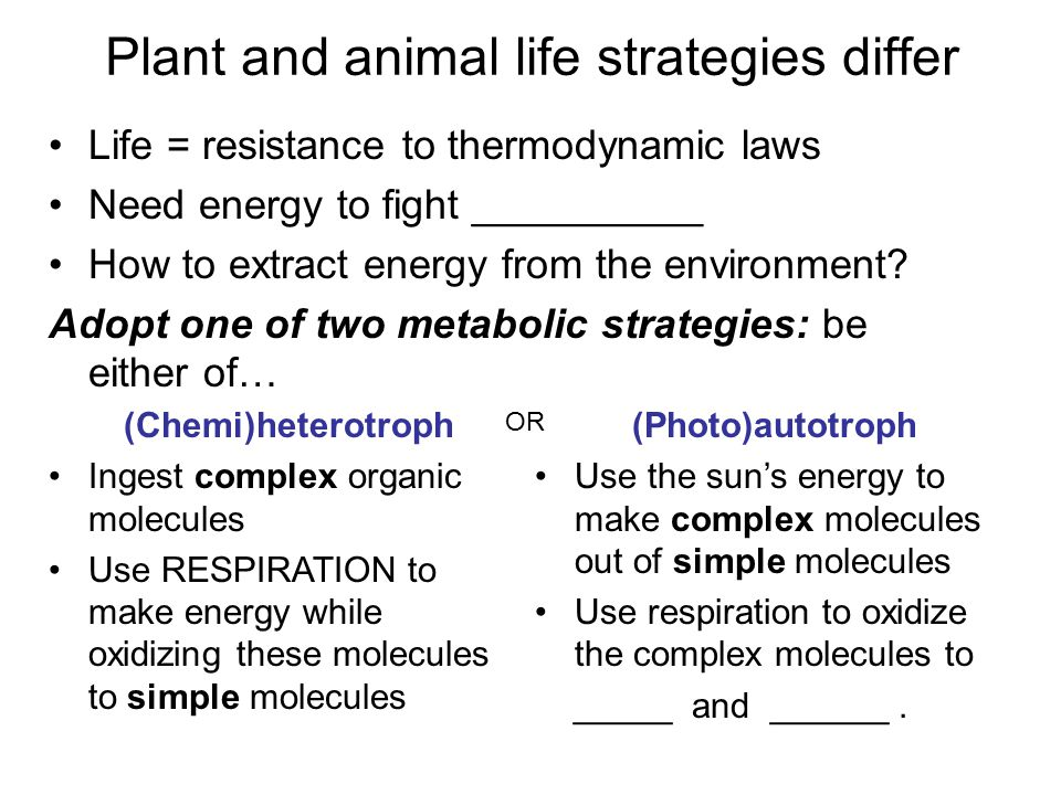Plant and animal life strategies differ Life = resistance to thermodynamic laws Need energy to fight __________ How to extract energy from the environment.